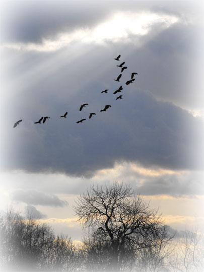 Light-shaft-2-with-birds