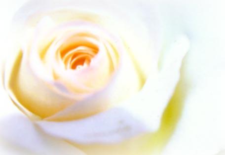 Lightbringer-rose 2